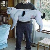A reely Big hairy Pussy